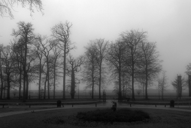 Fog caught with a crappy smartphone