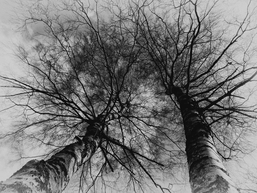 Trees to Heaven
