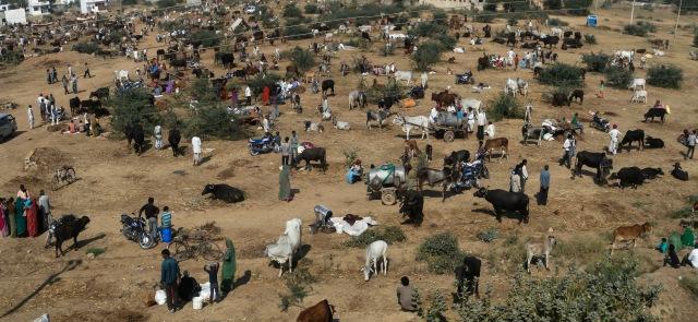 Cow market (India)