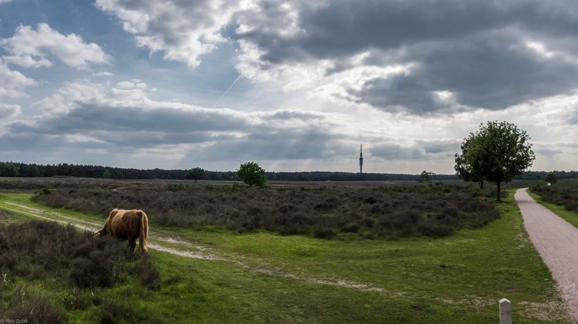 The 'Westerheide' north of Hilversum
