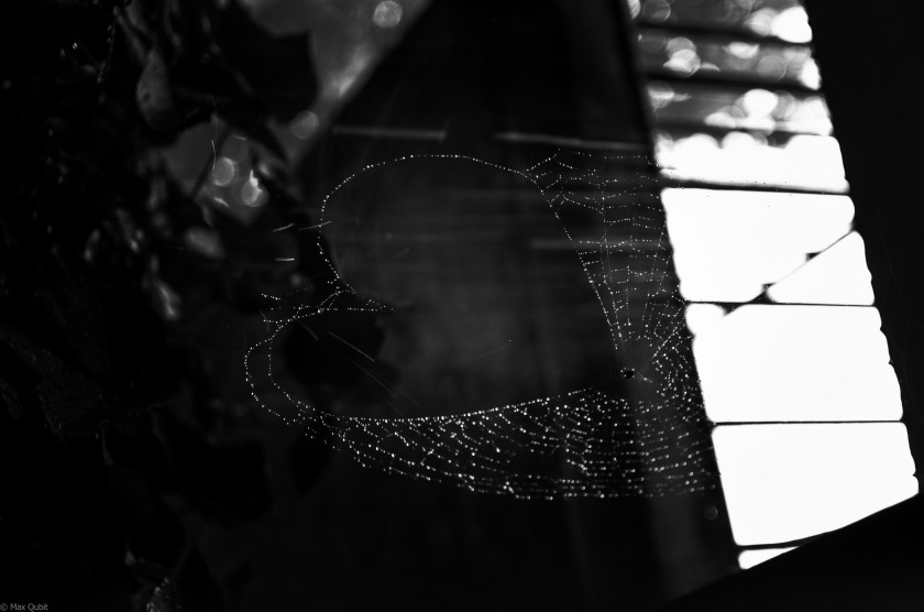 A spiders heart made of raindrop diamonds