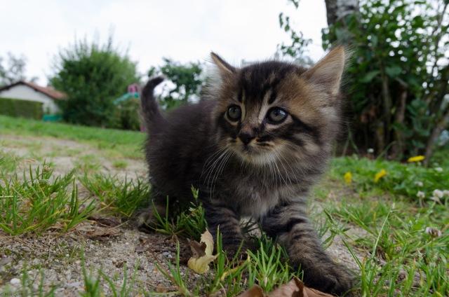 Le grand petit chat
