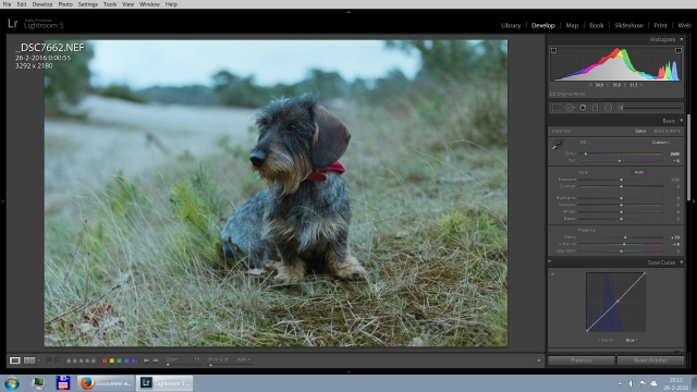 Charlie_in_Lightroom3