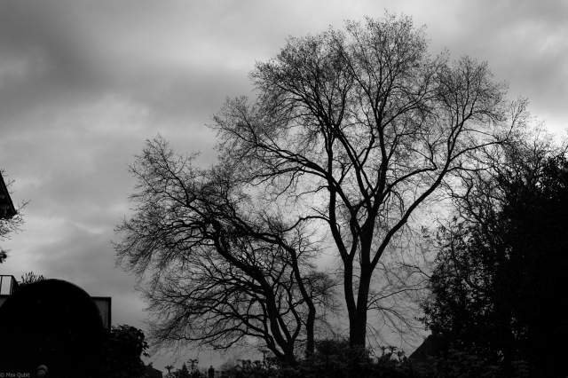 My backyard tree